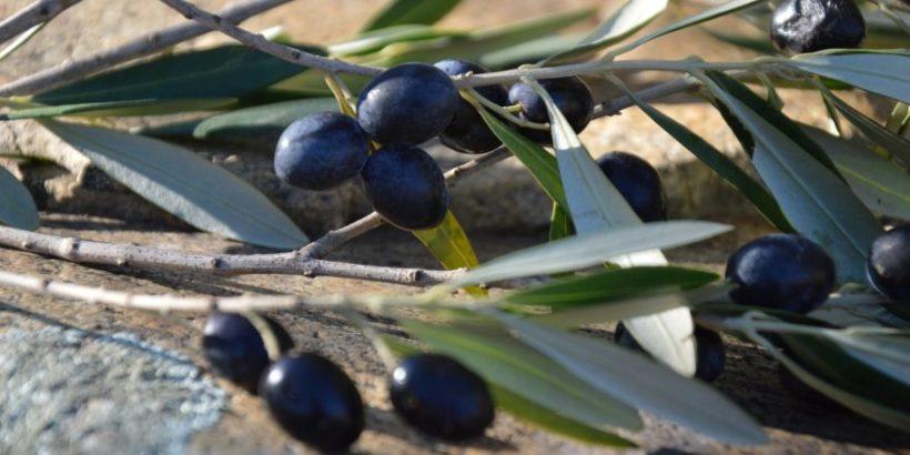 olive nere corretta conservazione