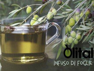 Foto Infuso Olivo