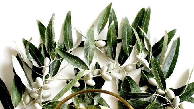 Benefici olio d'oliva