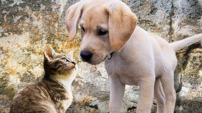 Benefici olio e animali domestici