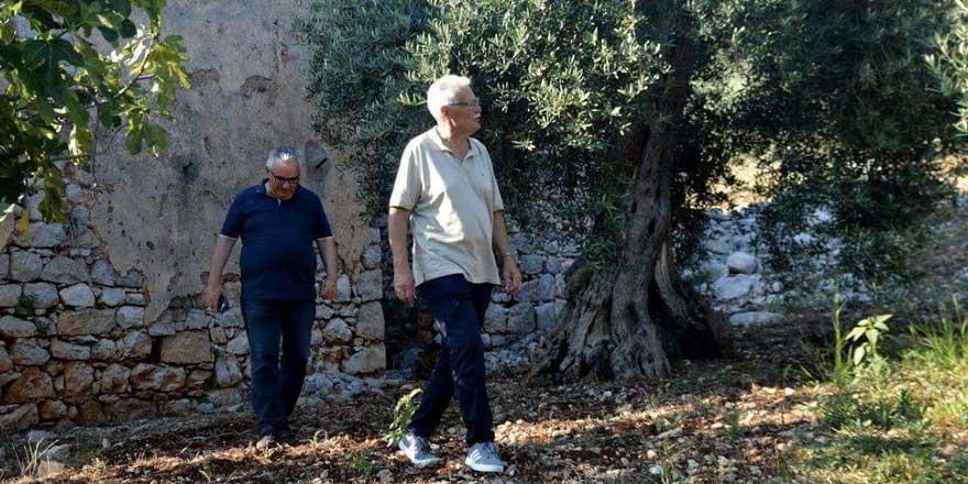Risanamento danni olivi