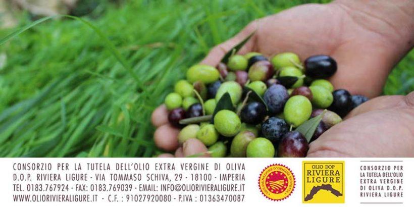 Patto filiera olio DOP Riviera Ligure