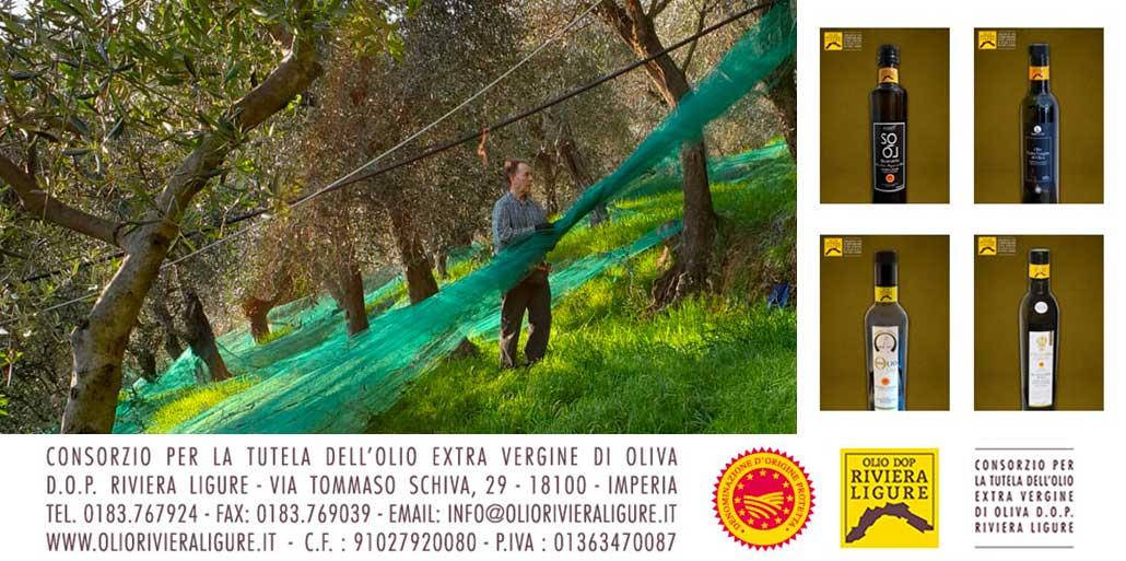Nuovi Consorziati Olio DOP Riviera Ligure